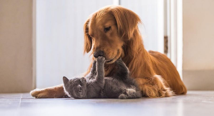 Which dogs are good with cats