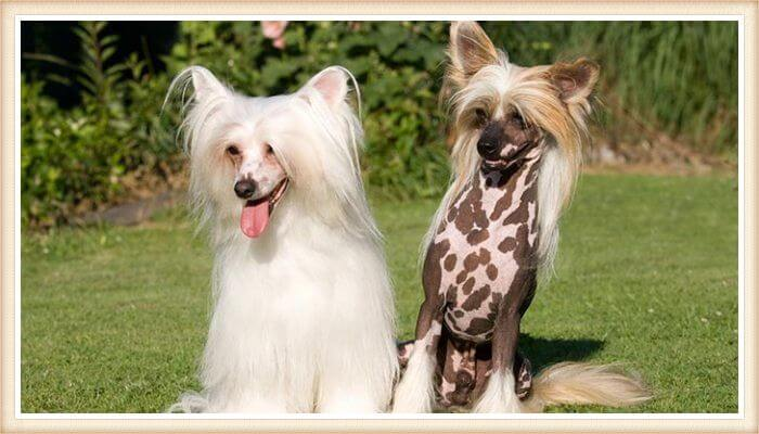 dogs that shed a lot
