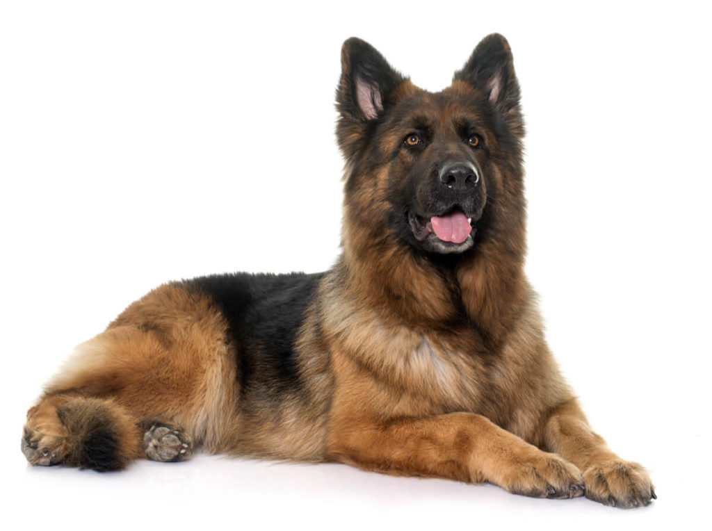 What dogs are the easiest to train