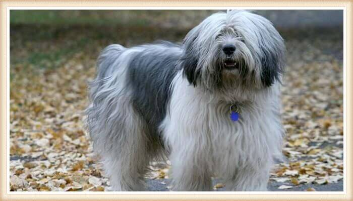 what dogs are hypoallergenic