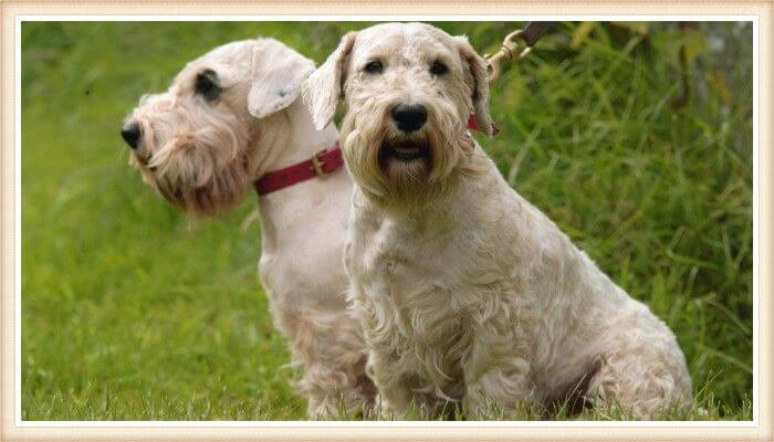 no shed dogs breeds