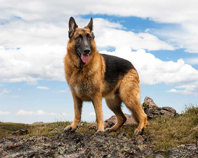 select a dog breed