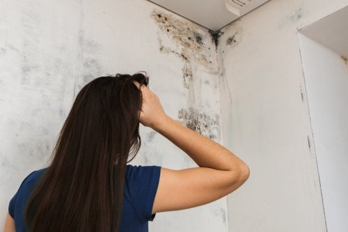 5 ways to get rid of mold on your bathroom ceiling
