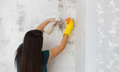 Solution to eliminate mold