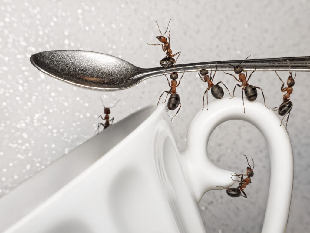 How to get rid of ants in the house?  4 easy ways to kill ants