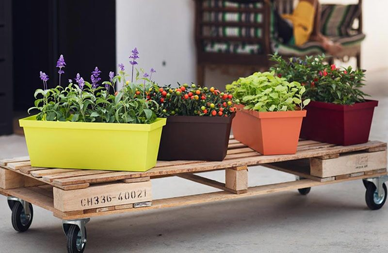 Plants on a wooden pallet