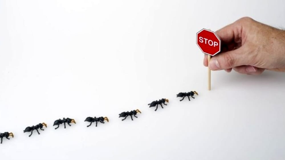 Ants in the house - not all are the same!