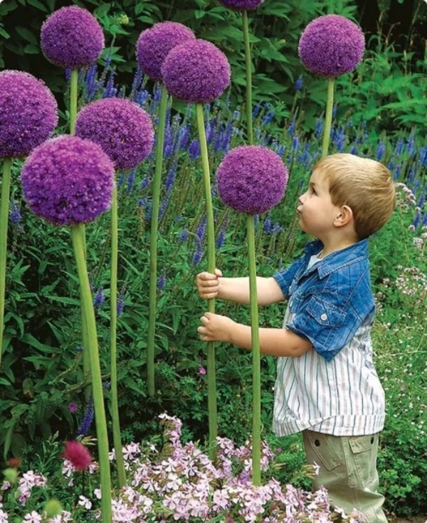 DIY-projects-for-your-garden-01