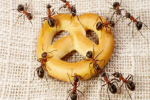How to get rid of ants in the bathroom : 10 methods