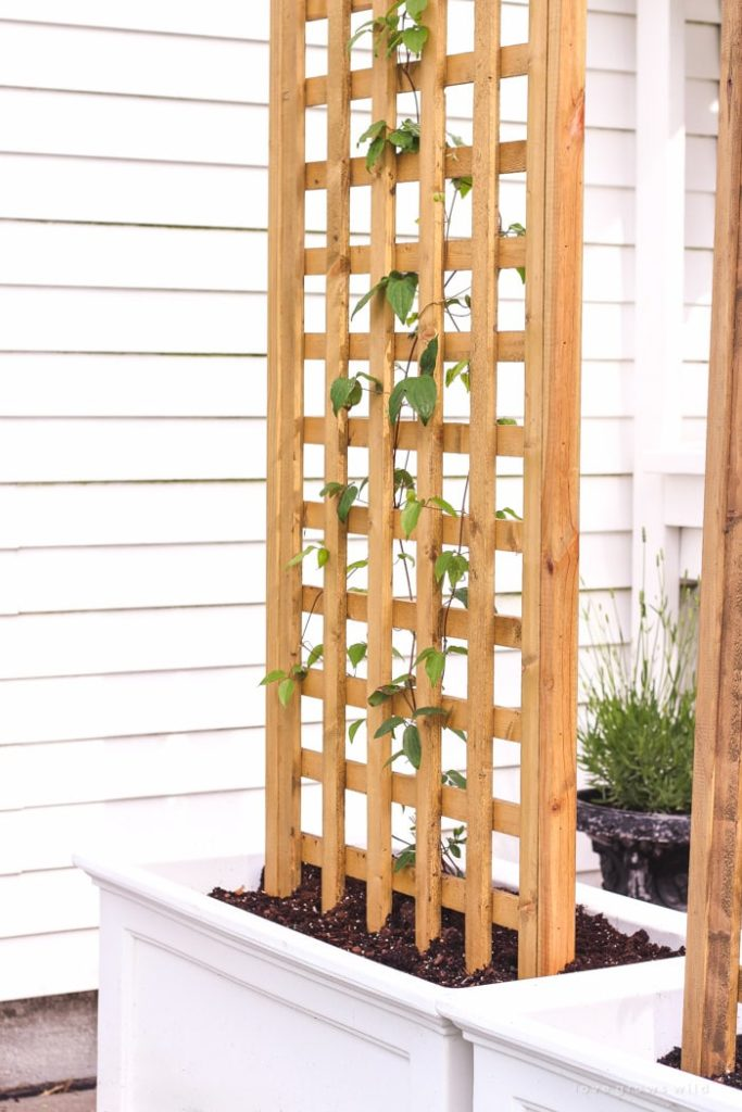 4. Create a claustra planter for more privacy